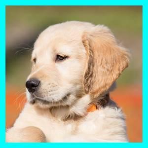 Blog-Doggie