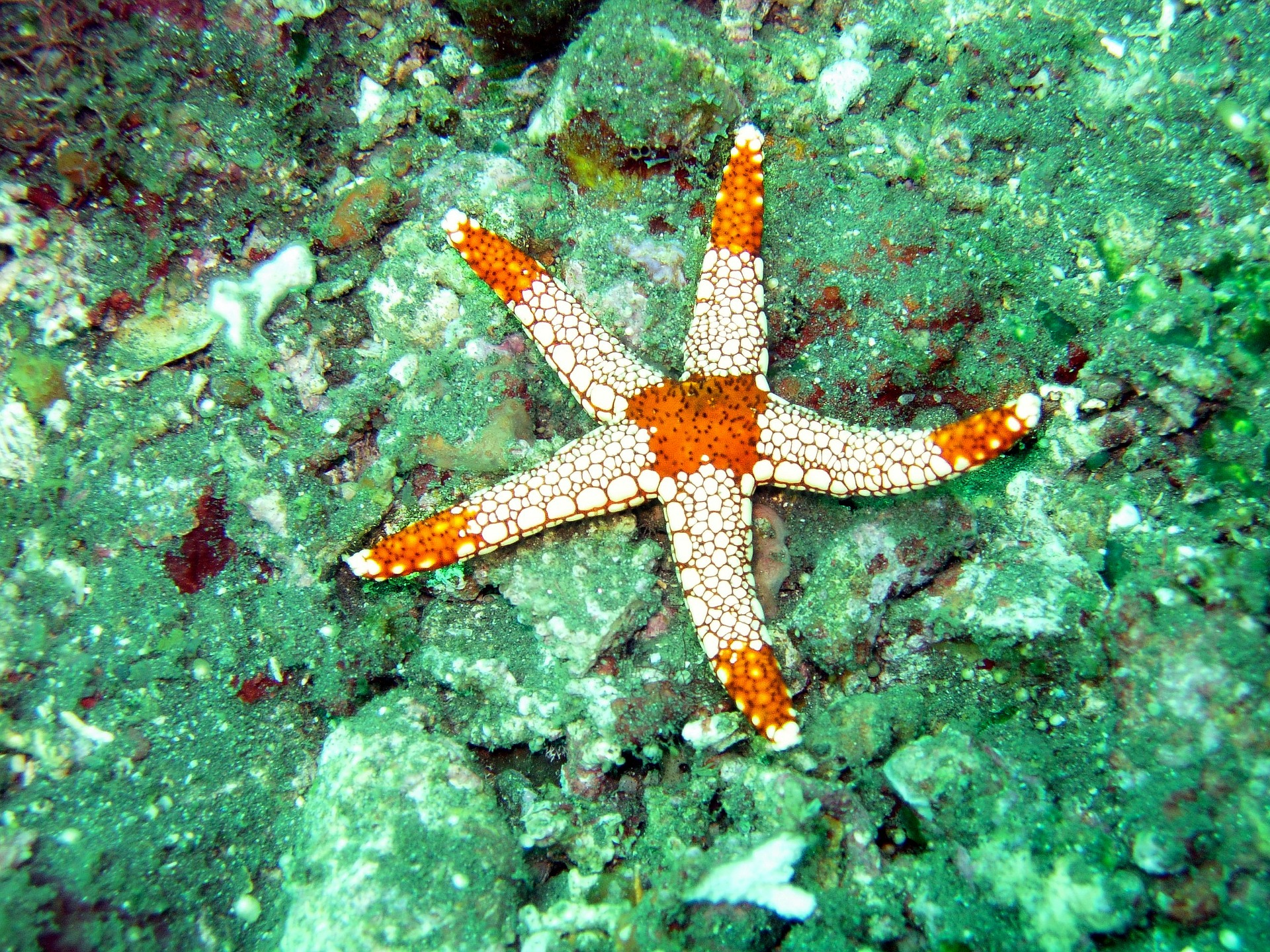 The arms of a sea star is an example of the Fibonacci sequence in nature.